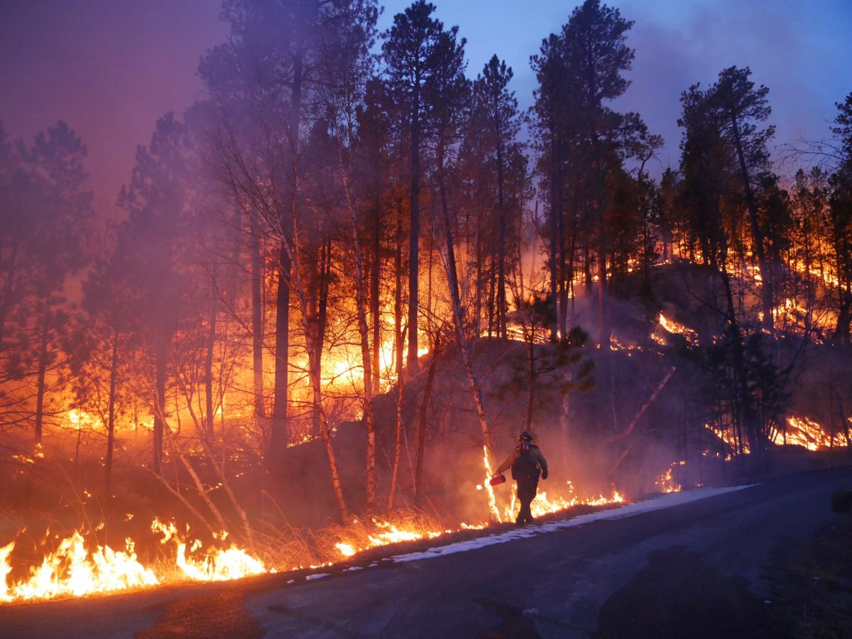 Single firefighter silhouette in front of forest fire on hill