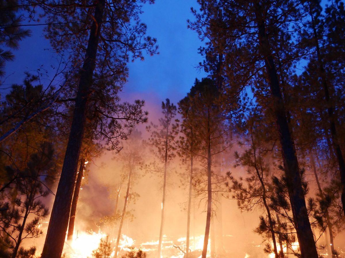Fire glowing in trees on night sky